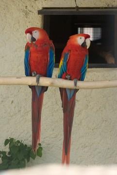 Фото Парк птиц Воробьи (Калужская область) .