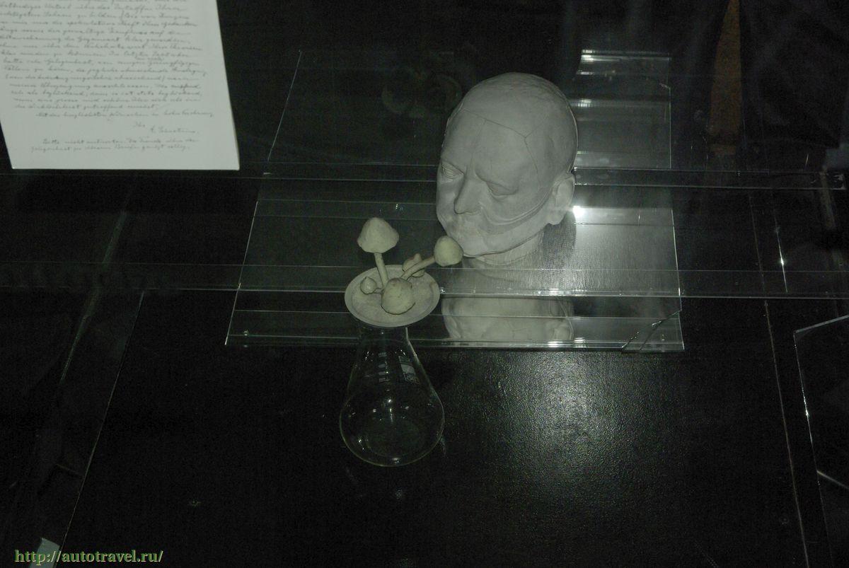 Музеи СанктПетербурга  список из 144 музеев часы работы